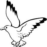 seagull 2.jpg