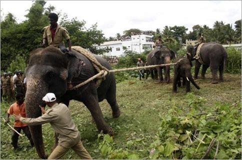 India Elephant Rampage 03