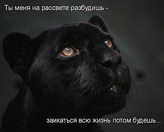 1313736339_kotomatritsa-3