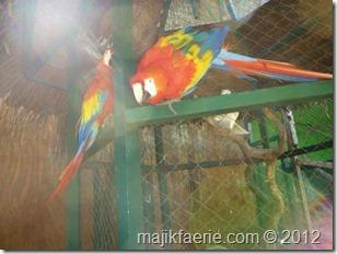 33-gili-meno-bird-park-640x480_thumb