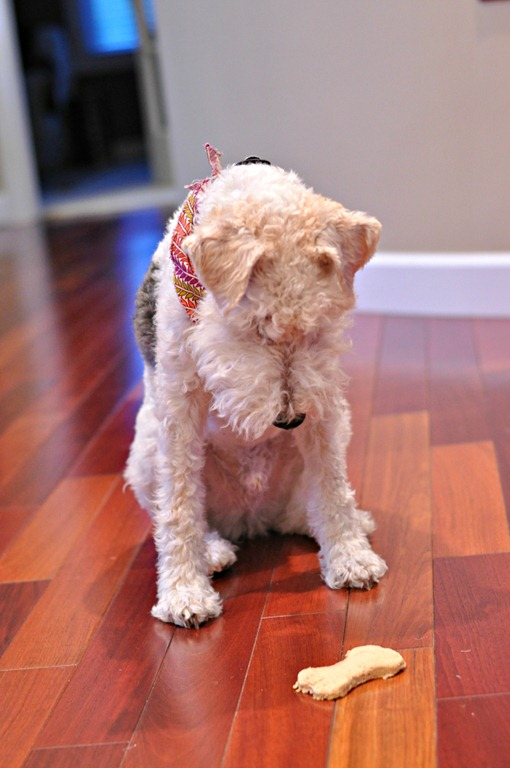 Homemade Dog Biscuits for a Wire Fox Terrier