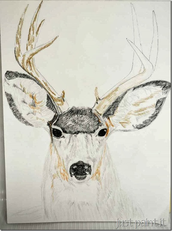 Deerhead-Sketch-C