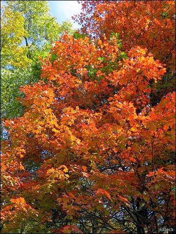 fall foliage Blairsville area