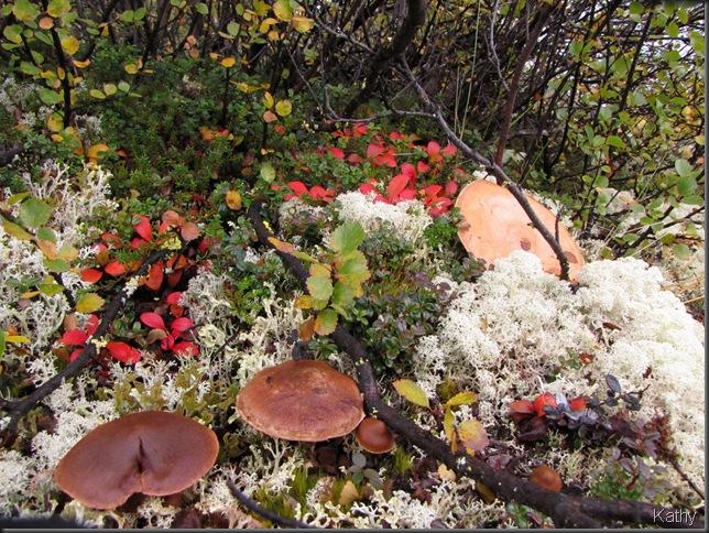 Mushrooms, lichen, and foliage