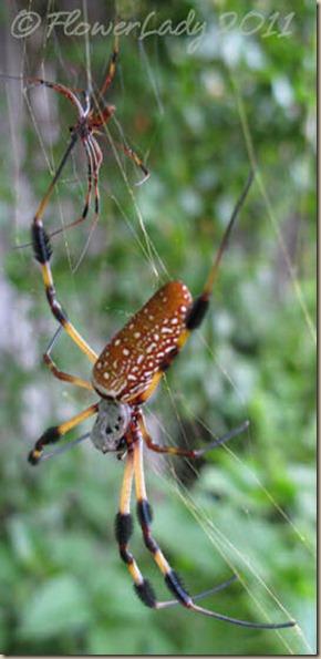 07-17-spider7