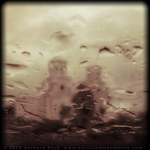 141231_Tucson_SanXavier_rain