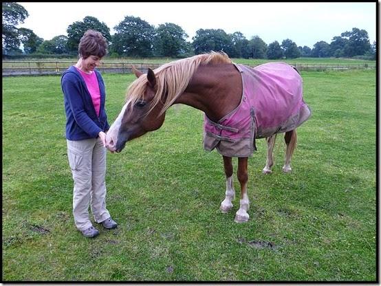 2753horse