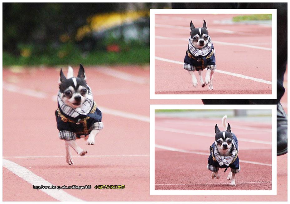 dog-fly02.jpg