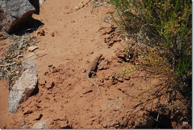 04-29-14 A Homolovi Ruins State Park (109)