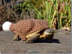 cosasdivertidas tortugas con ganchillo (13)