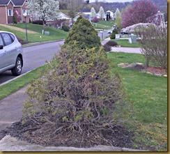 bushes 2