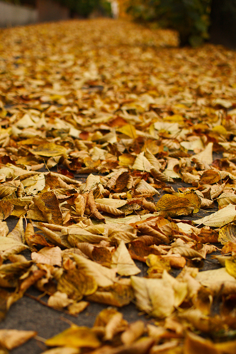The autumn leaves form a blanket after a series of days without wind, in Berlin, Germany.