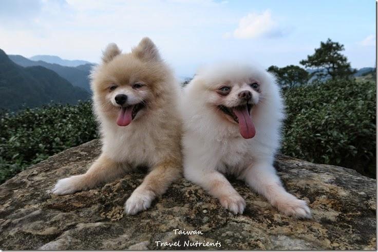 三峽熊空茶園 (15)