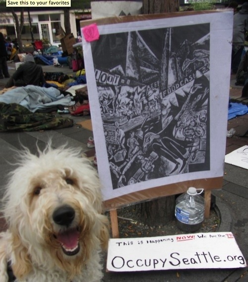 cute-pets-at-occupy-wall-street-14