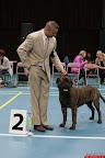20130511-BMCN-Bullmastiff-Championship-Clubmatch-2335.jpg