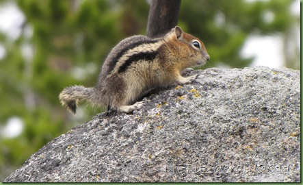 ChipmunkOn ObsidianBoulder