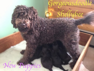 Mama Shellybee with puppies