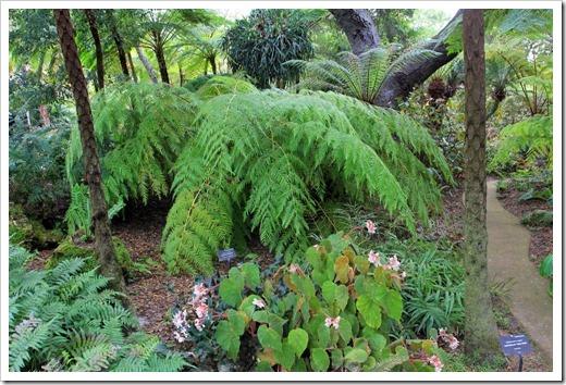 130403_Lotusland_Fern-Garden_02_Cibotium-schiedei