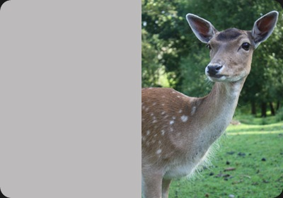 deer_one