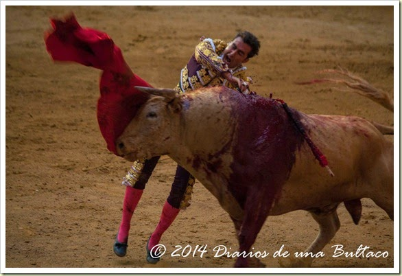 Toros 2014 (1)-43