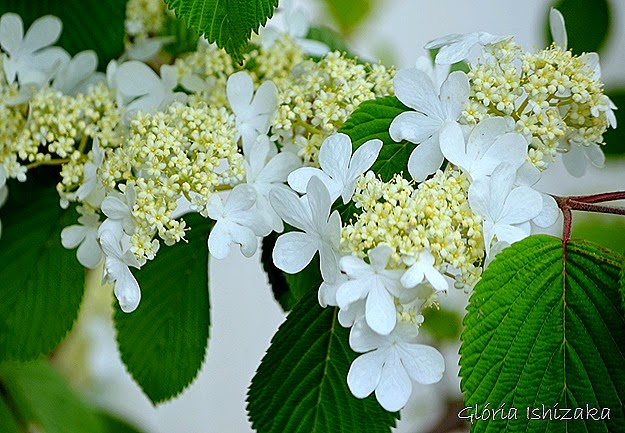 Glória Ishizaka - flor 2