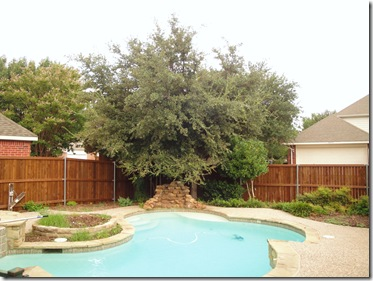 1.  Backyard tree before