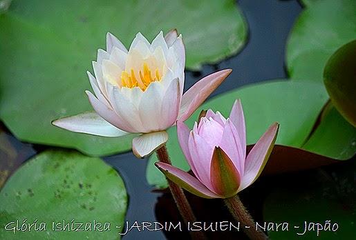 Glória Ishizaka - Nara - JP _ 2014 - 89