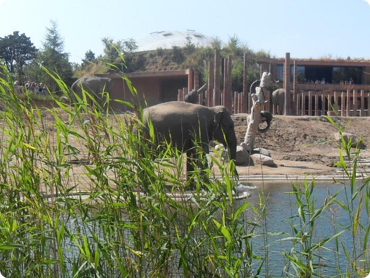 Elefanterne i Zoo - set fra Frederiksberg Have, August 2013