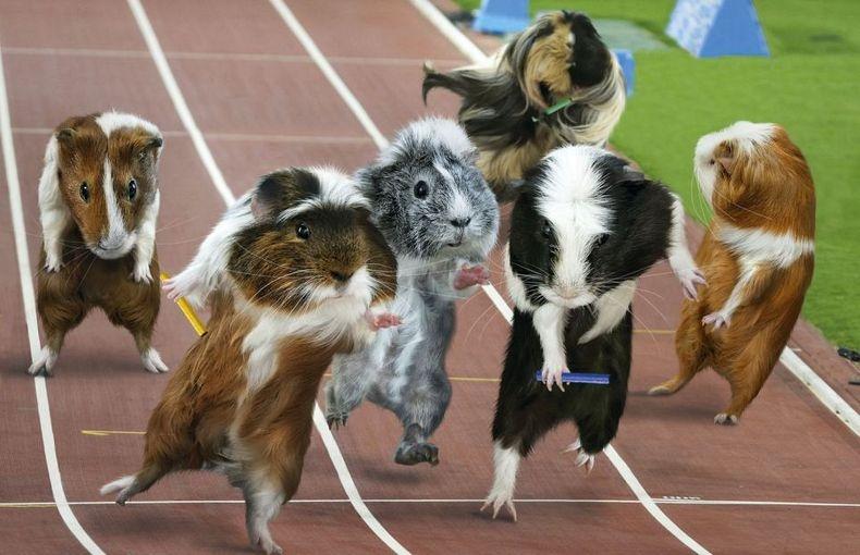 guinea-pig-games-7