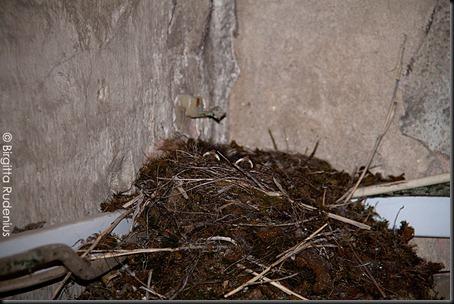 birds_20120526_nest