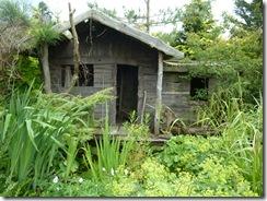 paddock farm 034