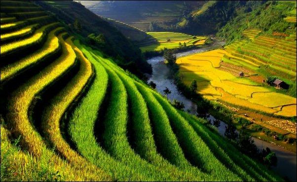 صور فيتنام مميزة