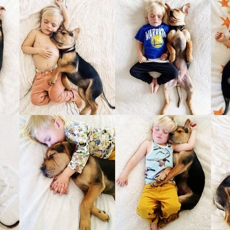 Theo and Beau: The Napping Toddler and Puppy