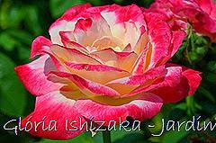 14   - Glória Ishizaka - Rosas do Jardim Botânico Nagai - Osaka