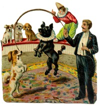 circus dogs vintage image graphicsfairy008b