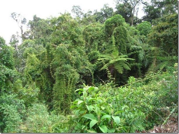 beautiful-amazon-rain-forest-5