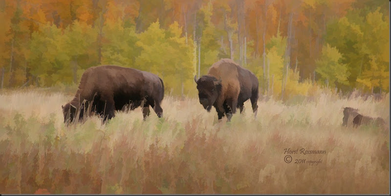 Bison Painting copy