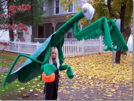 mantis religiosa disfrazcasero (1)