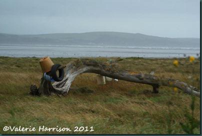 10-driftwood