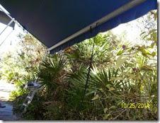 CLERMONT FLORIDA 005