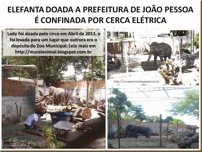 elefanta-lady1