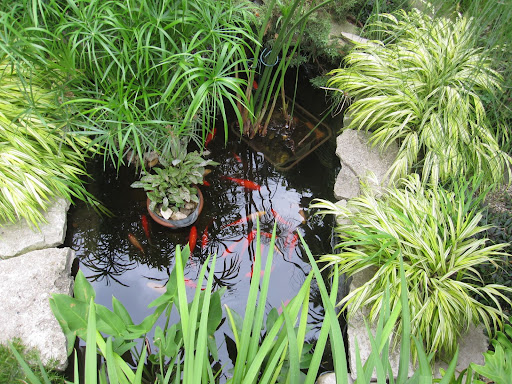 The koi pond offers the gentle sound of flowing water.