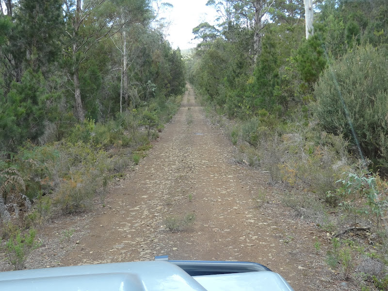 Tasmania SE Richmond to Bicheno on Forestry roads