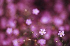lavendercolor.2632878163_6260a14001_m.jpg