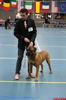 20130510-Bullmastiff-Worldcup-0419.jpg