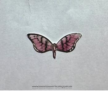 3D-Schmetterling4-fertig