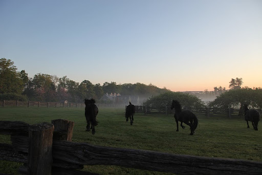 Martha currently has four Dutch Friesian geldings at her farm in Bedford: Rutger, Rinze, Ramon, and Meindert.  Martha writes in her blog.