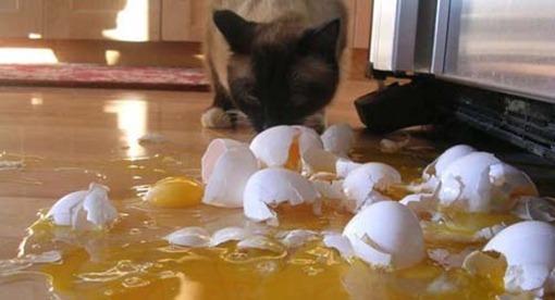 Кошка с яичницей