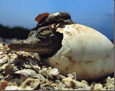 Amazing Animals Pictures (2)