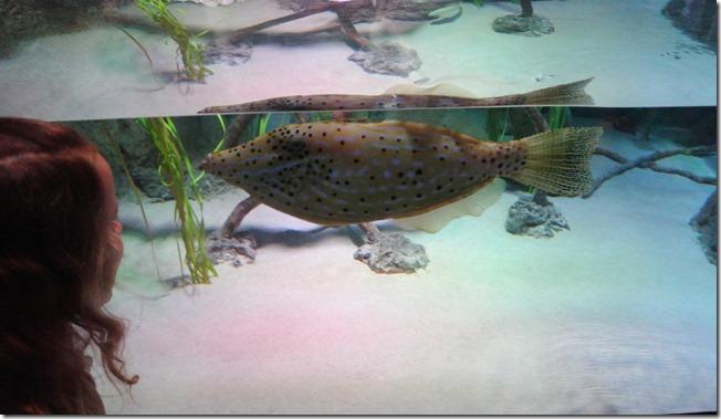 Sea Life Aquarium 064 - Copy